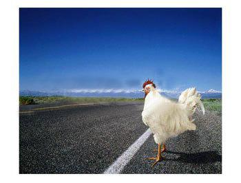 Why did the chicken cross the road ? Philosophical Game